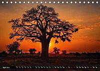 Afrikas Bäume (Tischkalender 2019 DIN A5 quer) - Produktdetailbild 4