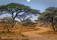 Afrikas Bäume (Wandkalender 2019 DIN A4 quer) - Produktdetailbild 10