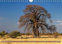 Afrikas Bäume (Wandkalender 2019 DIN A4 quer) - Produktdetailbild 11