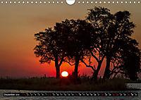 Afrikas Bäume (Wandkalender 2019 DIN A4 quer) - Produktdetailbild 12