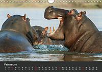 Afrikas Dickhäuter. Hippos, Nashörner und Elefanten (Wandkalender 2019 DIN A4 quer) - Produktdetailbild 2