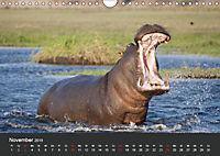 Afrikas Dickhäuter. Hippos, Nashörner und Elefanten (Wandkalender 2019 DIN A4 quer) - Produktdetailbild 11