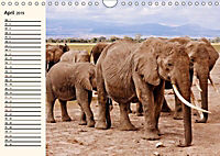 Afrikas Dickhäuter. Hippos, Nashörner und Elefanten (Wandkalender 2019 DIN A4 quer) - Produktdetailbild 4