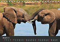 Afrikas Dickhäuter. Hippos, Nashörner und Elefanten (Tischkalender 2019 DIN A5 quer) - Produktdetailbild 1