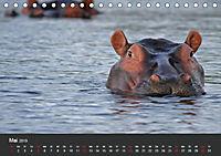 Afrikas Dickhäuter. Hippos, Nashörner und Elefanten (Tischkalender 2019 DIN A5 quer) - Produktdetailbild 5