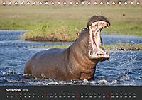 Afrikas Dickhäuter. Hippos, Nashörner und Elefanten (Tischkalender 2019 DIN A5 quer) - Produktdetailbild 11