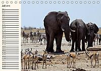 Afrikas Dickhäuter. Hippos, Nashörner und Elefanten (Tischkalender 2019 DIN A5 quer) - Produktdetailbild 7