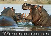Afrikas Dickhäuter. Hippos, Nashörner und Elefanten (Wandkalender 2019 DIN A3 quer) - Produktdetailbild 2