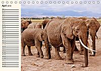 Afrikas Dickhäuter. Hippos, Nashörner und Elefanten (Tischkalender 2019 DIN A5 quer) - Produktdetailbild 4