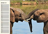 Afrikas Dickhäuter. Hippos, Nashörner und Elefanten (Wandkalender 2019 DIN A2 quer) - Produktdetailbild 1