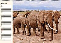 Afrikas Dickhäuter. Hippos, Nashörner und Elefanten (Wandkalender 2019 DIN A2 quer) - Produktdetailbild 4