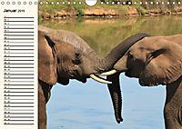 Afrikas Dickhäuter. Hippos, Nashörner und Elefanten (Wandkalender 2019 DIN A4 quer) - Produktdetailbild 1