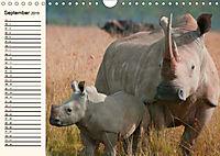 Afrikas Dickhäuter. Hippos, Nashörner und Elefanten (Wandkalender 2019 DIN A4 quer) - Produktdetailbild 9