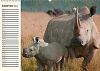 Afrikas Dickhäuter. Hippos, Nashörner und Elefanten (Wandkalender 2019 DIN A2 quer) - Produktdetailbild 9