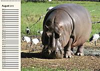 Afrikas Dickhäuter. Hippos, Nashörner und Elefanten (Wandkalender 2019 DIN A2 quer) - Produktdetailbild 8