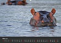 Afrikas Dickhäuter. Hippos, Nashörner und Elefanten (Wandkalender 2019 DIN A2 quer) - Produktdetailbild 5