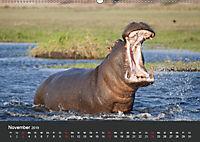 Afrikas Dickhäuter. Hippos, Nashörner und Elefanten (Wandkalender 2019 DIN A2 quer) - Produktdetailbild 11