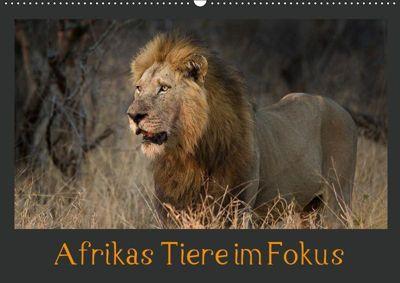 Afrikas Tiere im FokusAT-Version (Wandkalender 2019 DIN A2 quer), Johann Schörkhuber