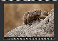 Afrikas Tiere im FokusAT-Version (Wandkalender 2019 DIN A2 quer) - Produktdetailbild 6