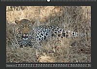 Afrikas Tiere im FokusAT-Version (Wandkalender 2019 DIN A2 quer) - Produktdetailbild 9