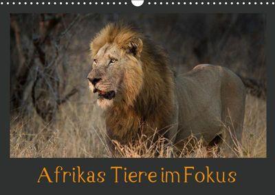 Afrikas Tiere im FokusAT-Version (Wandkalender 2019 DIN A3 quer), Johann Schörkhuber