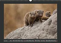 Afrikas Tiere im FokusAT-Version (Wandkalender 2019 DIN A3 quer) - Produktdetailbild 6