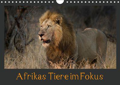 Afrikas Tiere im FokusAT-Version (Wandkalender 2019 DIN A4 quer), Johann Schörkhuber