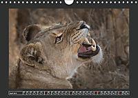 Afrikas Tiere im FokusAT-Version (Wandkalender 2019 DIN A4 quer) - Produktdetailbild 4