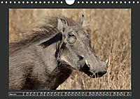 Afrikas Tiere im FokusAT-Version (Wandkalender 2019 DIN A4 quer) - Produktdetailbild 5