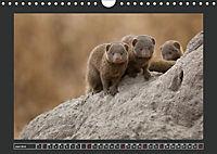 Afrikas Tiere im FokusAT-Version (Wandkalender 2019 DIN A4 quer) - Produktdetailbild 6