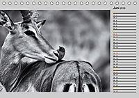 Afrikas Tierwelt in schwarz & weiß (Tischkalender 2019 DIN A5 quer) - Produktdetailbild 6