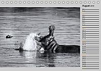 Afrikas Tierwelt in schwarz & weiß (Tischkalender 2019 DIN A5 quer) - Produktdetailbild 8