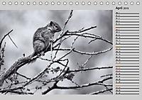 Afrikas Tierwelt in schwarz & weiß (Tischkalender 2019 DIN A5 quer) - Produktdetailbild 4