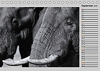 Afrikas Tierwelt in schwarz & weiß (Tischkalender 2019 DIN A5 quer) - Produktdetailbild 9