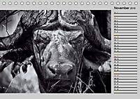 Afrikas Tierwelt in schwarz & weiß (Tischkalender 2019 DIN A5 quer) - Produktdetailbild 11