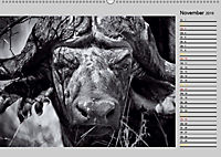 Afrikas Tierwelt in schwarz & weiß (Wandkalender 2019 DIN A2 quer) - Produktdetailbild 11