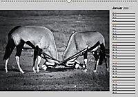 Afrikas Tierwelt in schwarz & weiß (Wandkalender 2019 DIN A2 quer) - Produktdetailbild 1