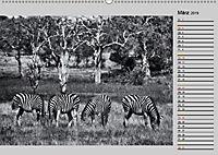 Afrikas Tierwelt in schwarz & weiß (Wandkalender 2019 DIN A2 quer) - Produktdetailbild 3