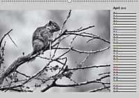 Afrikas Tierwelt in schwarz & weiß (Wandkalender 2019 DIN A2 quer) - Produktdetailbild 4