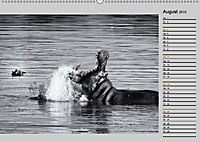 Afrikas Tierwelt in schwarz & weiß (Wandkalender 2019 DIN A2 quer) - Produktdetailbild 8