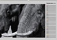 Afrikas Tierwelt in schwarz & weiß (Wandkalender 2019 DIN A2 quer) - Produktdetailbild 9