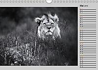 Afrikas Tierwelt in schwarz & weiss (Wandkalender 2019 DIN A4 quer) - Produktdetailbild 5