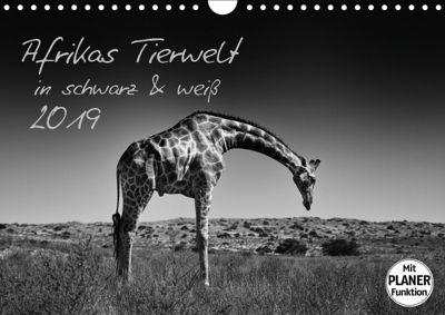 Afrikas Tierwelt in schwarz & weiß (Wandkalender 2019 DIN A4 quer), Kirsten Karius
