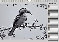 Afrikas Tierwelt in schwarz & weiss (Wandkalender 2019 DIN A4 quer) - Produktdetailbild 10