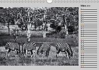 Afrikas Tierwelt in schwarz & weiß (Wandkalender 2019 DIN A4 quer) - Produktdetailbild 3