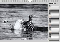 Afrikas Tierwelt in schwarz & weiss (Wandkalender 2019 DIN A4 quer) - Produktdetailbild 8
