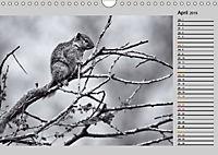 Afrikas Tierwelt in schwarz & weiß (Wandkalender 2019 DIN A4 quer) - Produktdetailbild 4