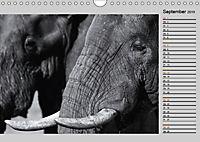 Afrikas Tierwelt in schwarz & weiss (Wandkalender 2019 DIN A4 quer) - Produktdetailbild 9