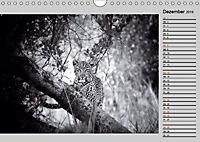 Afrikas Tierwelt in schwarz & weiss (Wandkalender 2019 DIN A4 quer) - Produktdetailbild 12