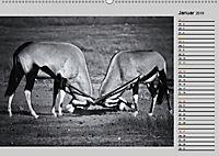 Afrikas Tierwelt in schwarz & weiss (Wandkalender 2019 DIN A2 quer) - Produktdetailbild 1